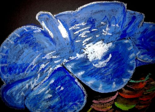 Giant clam closeup. Oil pastel on paper. Credit: Sarah Frias-Torres