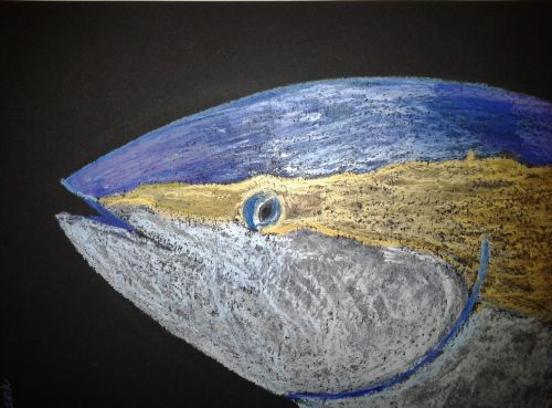 Bluefin tuna. Iridescent oil pastels on paper. Credit: Sarah Frias-Torres